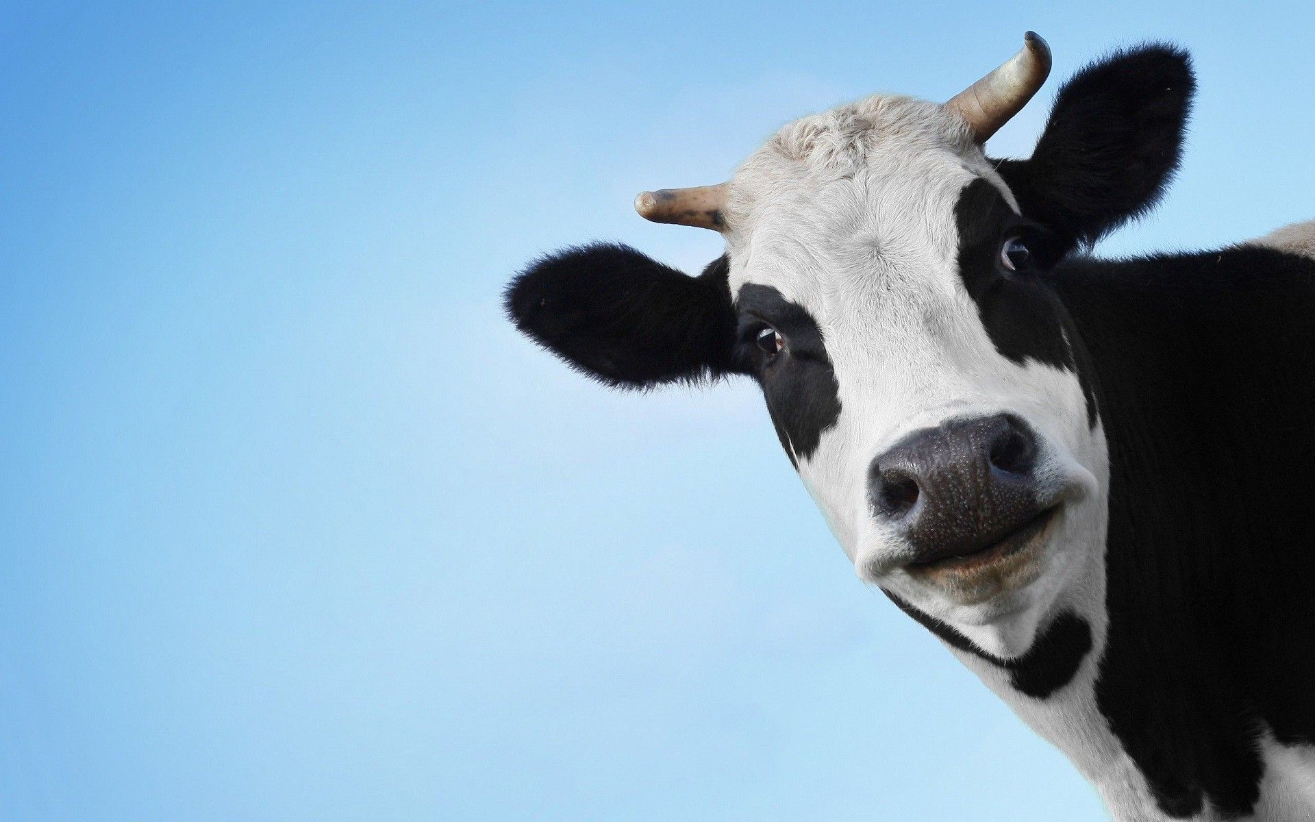 The Cow Jones