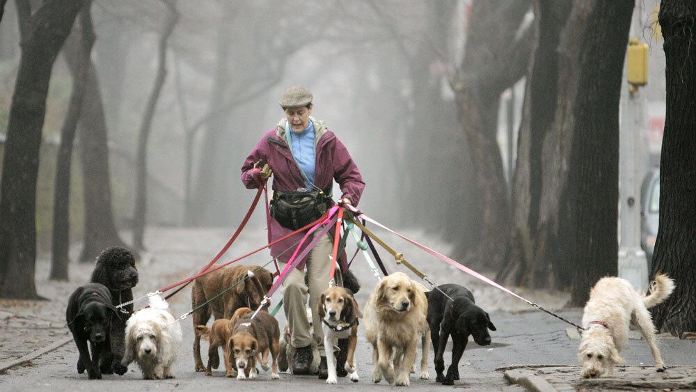 Dogs Demand