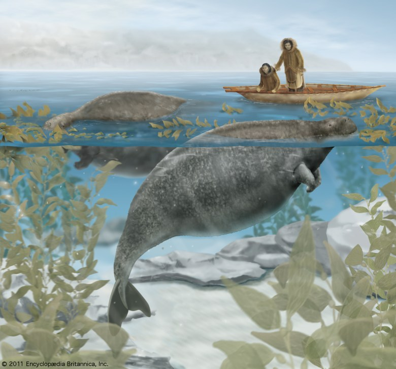 What Happened to the Steller's Sea Cow?