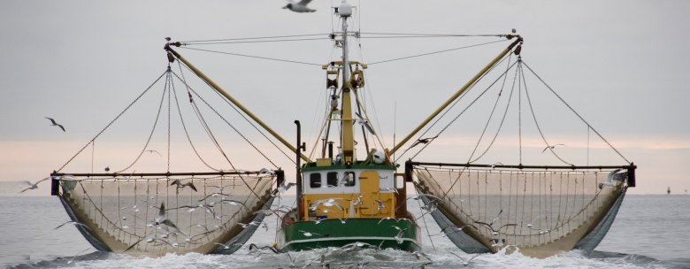 Commercial Fishing Heads
