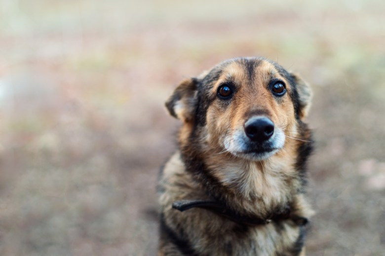 What Happens When You Abandon Your Pet?