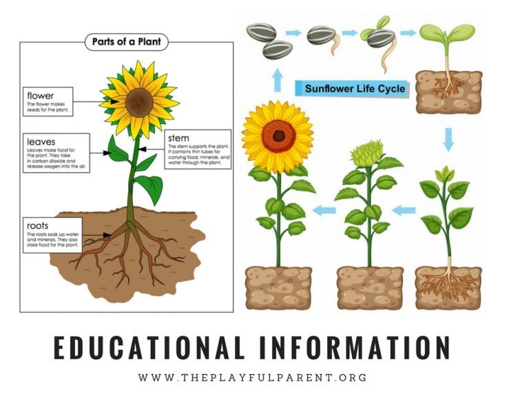 EDUCATIONAL INFORMATION.jpg