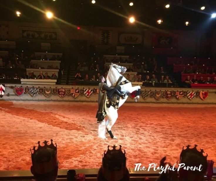 MT- HORSE.jpg
