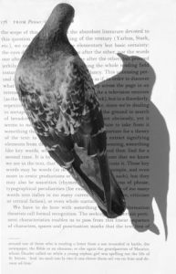 Pigeon Reader by Simon Morris (Photo Credit: Peter Heaton).