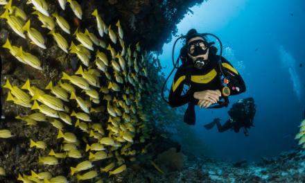 Sweet spots for Caribbean diving on Points