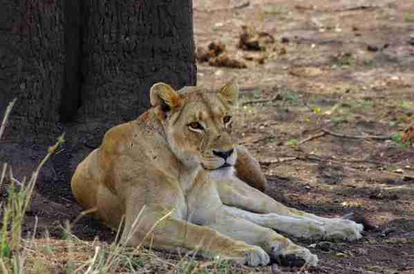 Braving the heat was worth it when we saw so many animals at Kruger. Photo by Lori Zaino.