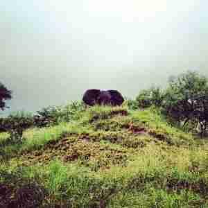 Elephant peekabo
