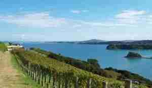 The clifftop vineyards at Te Whau are some of the island