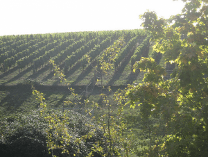 The Willamette Valley.