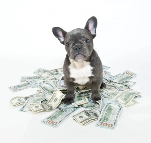 If you want your pet to accompany you to a hotel, pull out your wallett! (And no, this is not Miles) Image courtesy of Shutterstock.