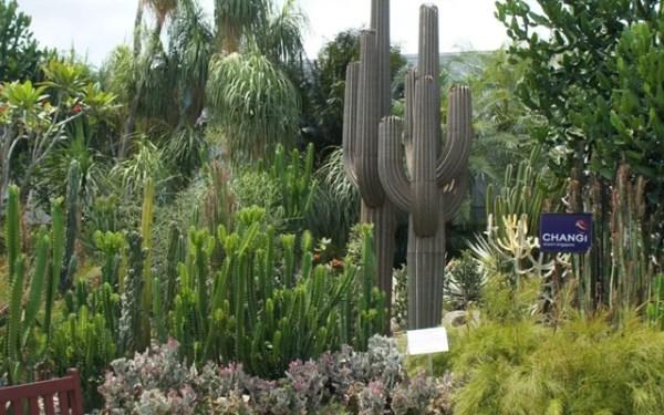 Breathe in some fresh air in the Cactus garden
