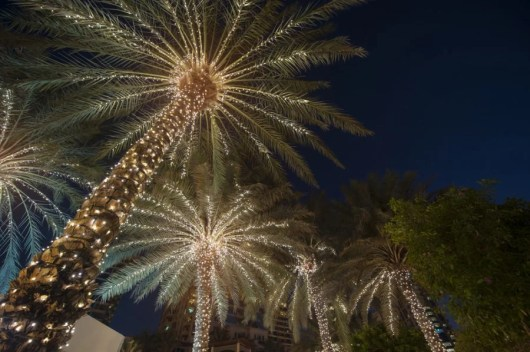 Christmas palms in Charleston, South Carolina