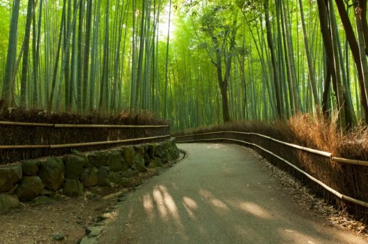The Bamboo Forest is stunning and best visited during a warmer season. Photo courtesy of Shutterstock.