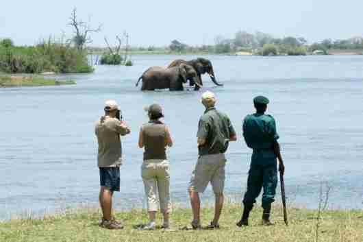 Tracking elephants on a walking safari in Majete. Photo credit: Robin Pope Safaris.