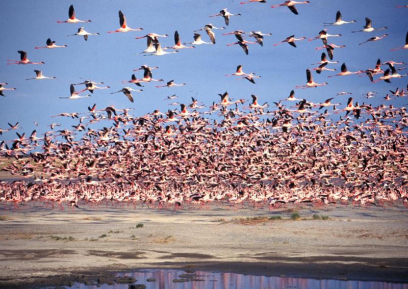See the flamingos that come to breed at the Kalahari's salt pans. Photo courtesy of Botswana Tourism.