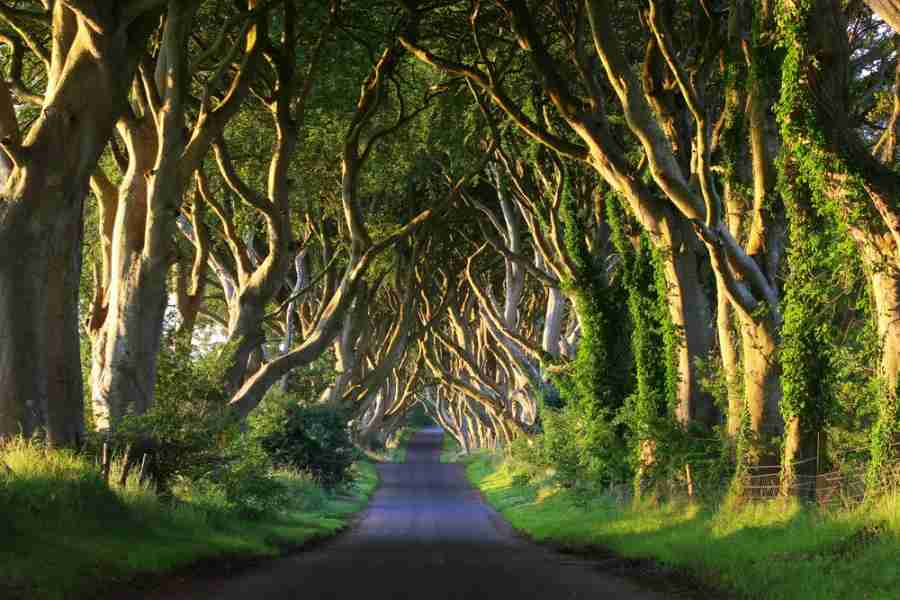 The Dark Hedges (Photo courtesy of Adrian Pluskota via Shutterstock)