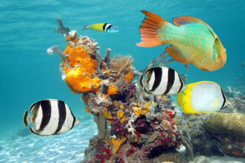 Cuba as a diving site is relatively unknown, but it's an amazing spot for scuba! Photo courtesy of Shutterstock.
