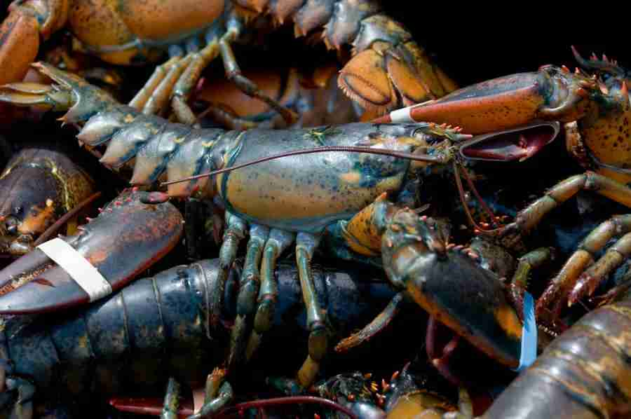 Lobster, anyone? Photo courtesy of Shutterstock.