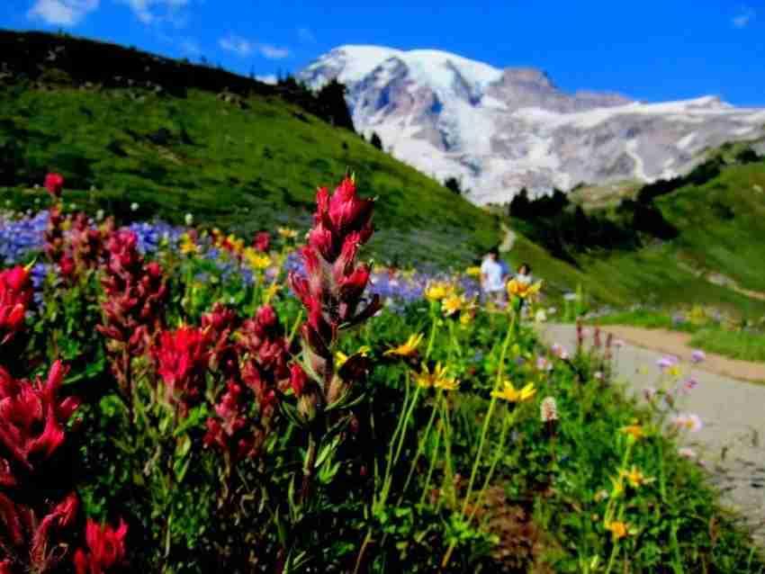 Mt. Rainier, Washington. Photo via EverGreen Escapes