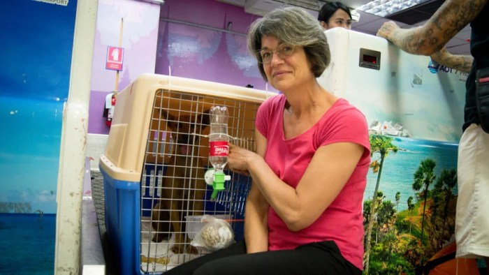 Soi Dog during rehab. Photo by Soi Dog Foundation.