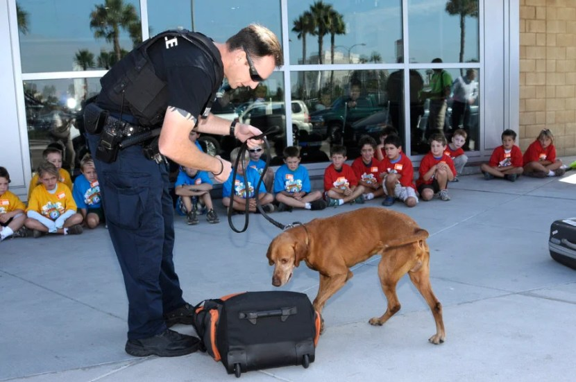 Many airports will start rolling out Vapor Wake bomb-sniffing dogs for extra security. Photo by San Diego International Airport / Flickr.