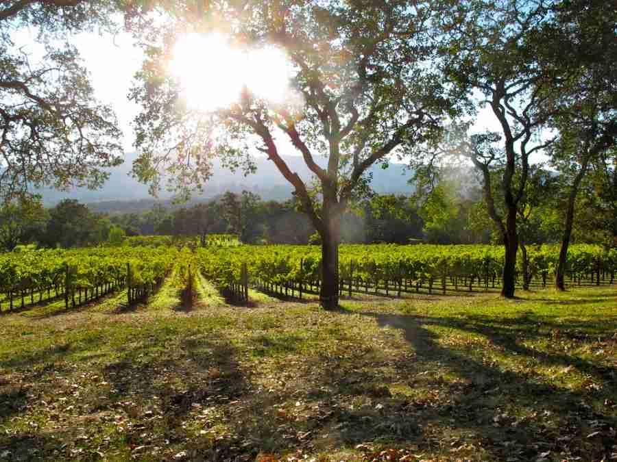 Sonoma vines (Photo courtesy of torbakhopper via Flickr)