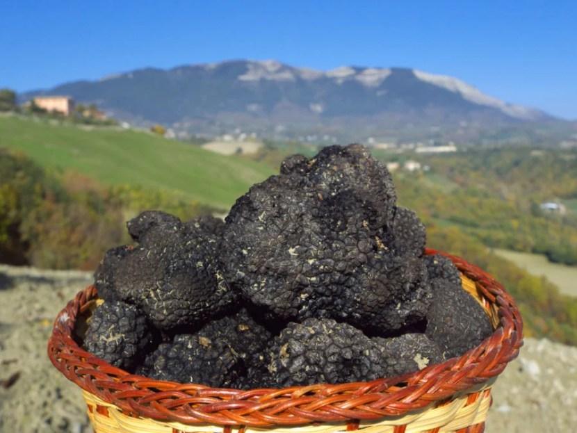 Truffle hunting in Italy, anyone? Photo courtesy of Shutterstock.
