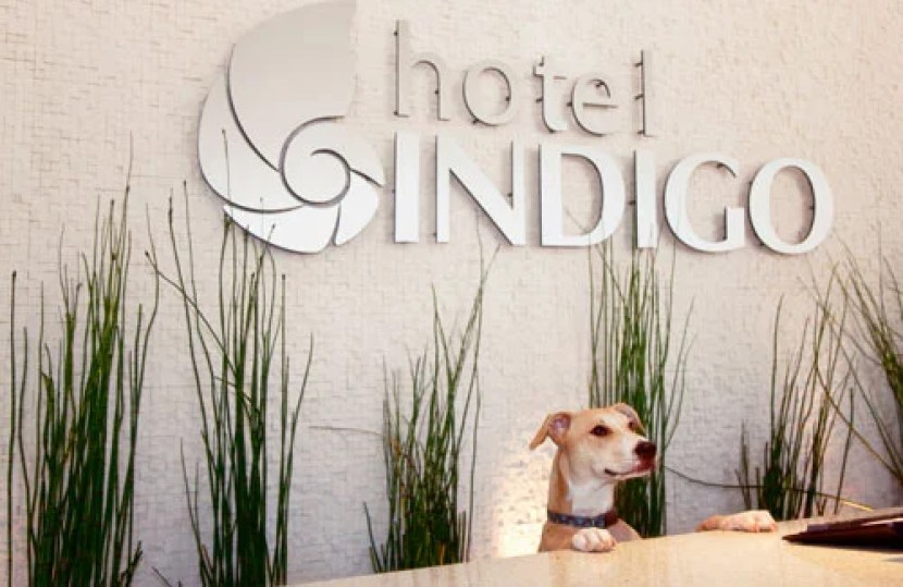 The Most Pet-Friendly Points Hotels in America