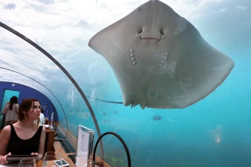 Ithaa Underwater Restaurant - Ray