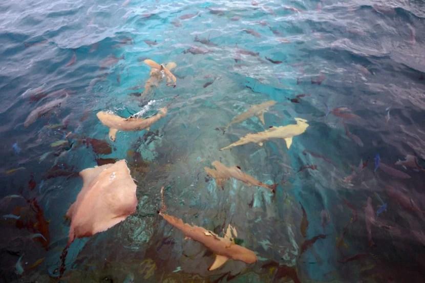 Ithaa Underwater Restaurant - From Above