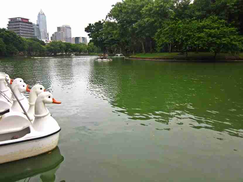 Paddle boats on the lake in Lumpini Park and Bangkok