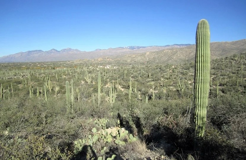Nature lovers will adore hiking through Saguaro National Park in Tucson. Image courtesy of Lori Zaino.