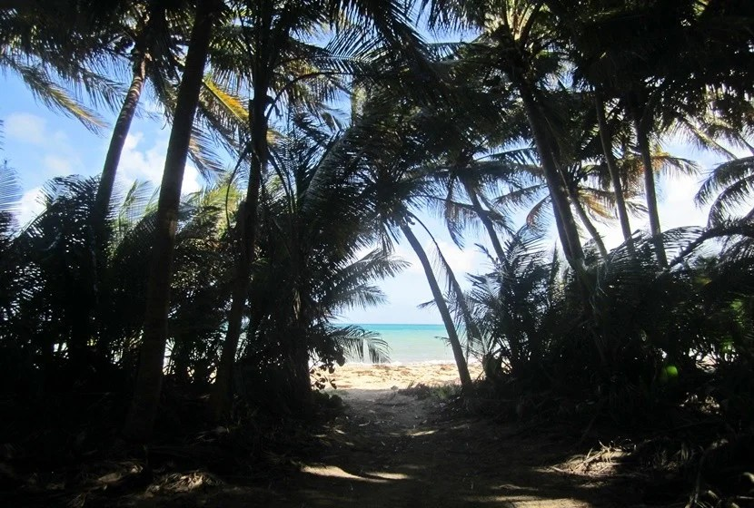 Palm trees leading out to a protected beach at Humecao Nature Reserve.