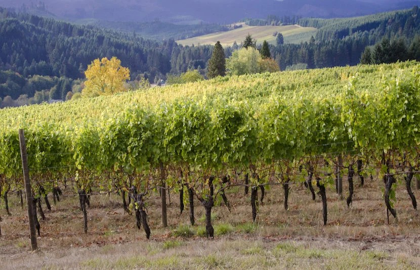 """A day at the vineyards is a perfect complement to your trip to Portland. Image courtesy of <a href=""""http://www.shutterstock.com/pic-116196442/stock-photo-a-panoramic-view-of-a-willamette-valley-vineyard-in-oregons-willamette-valley-wine-country-with-a-neighboring-vineyard-seen-in-the-distance.html?src=Y5JTV6Wb0A_pu3TQYAqZpg-1-13"""">Shutterstock</a>."""