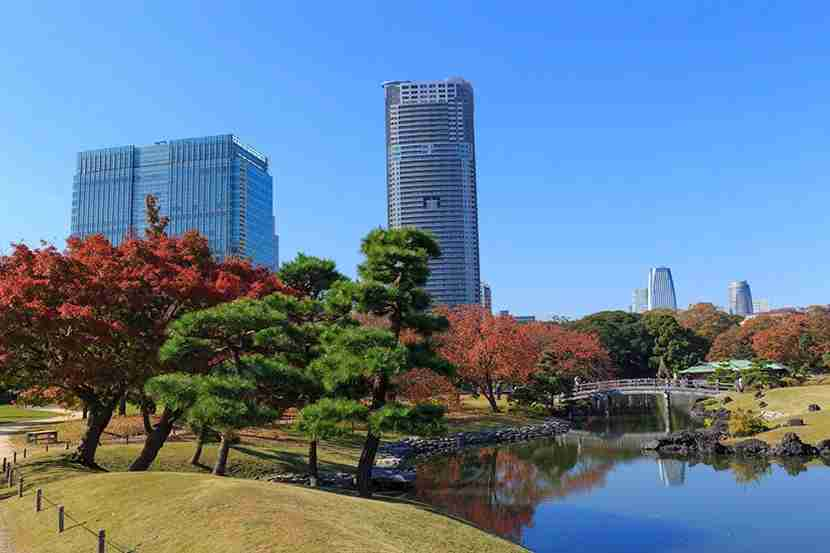 "With its small pond, Hamarikyu Gardens is a literal oasis from the action of the city. Image courtesy of <a href=""http://www.shutterstock.com/pic-227357536/stock-photo-autumn-leaves-in-hamarikyu-gardens-tokyo.html?src=ttZV0gB50NHBsWOs0knw9A-1-11"">Shutterstock</a>."