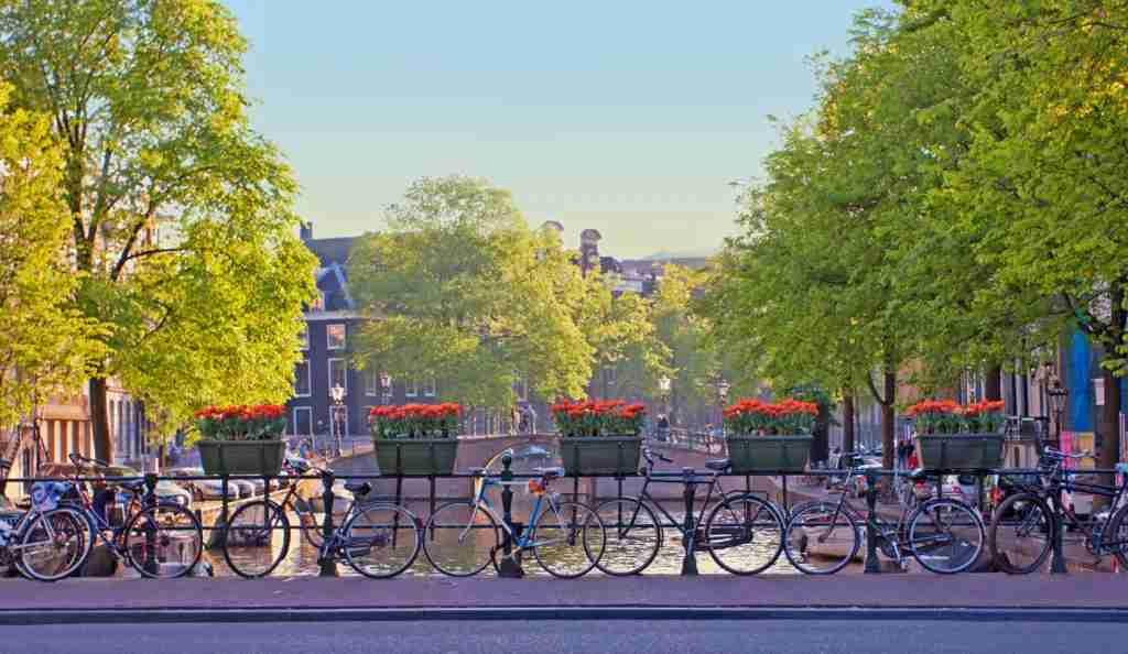 Amsterdam, land of tulip petals and bicycle pedals. Image courtesy of NADEJDA2015 via Getty Images.