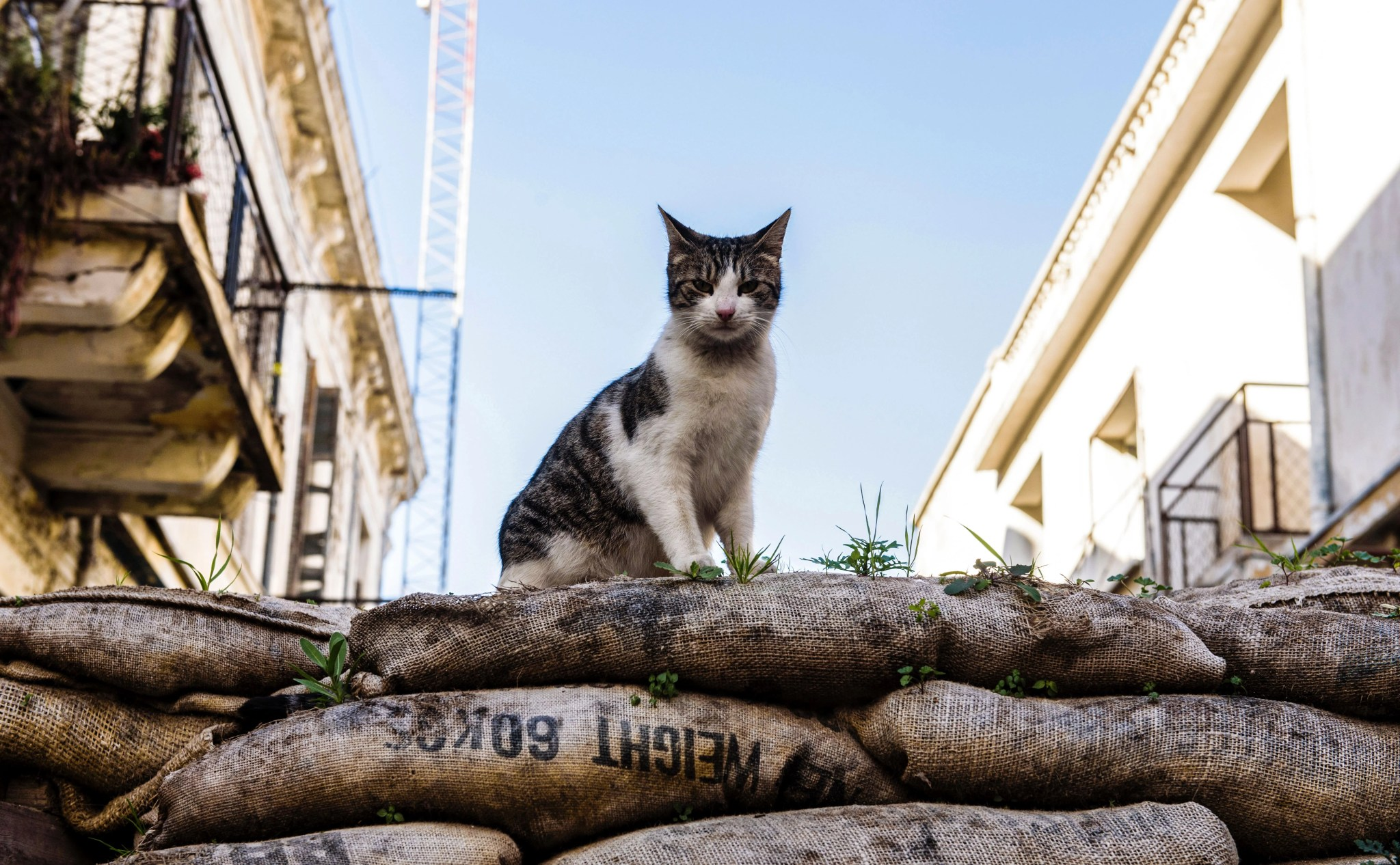 A cat mans the barricades in the divided Cypriot capital of Nicosia. Photo by Iakovos Hatzistavrou via Getty Images.