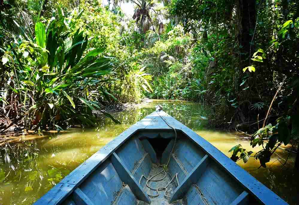 Taken a boat ride in the Amazon. Image by David Curtis / Getty Images.