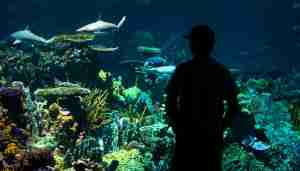 The Blacktip Shark Reef exhibit at the Baltimore Aquarium. Photo by Katherine Frey/Getty Images.