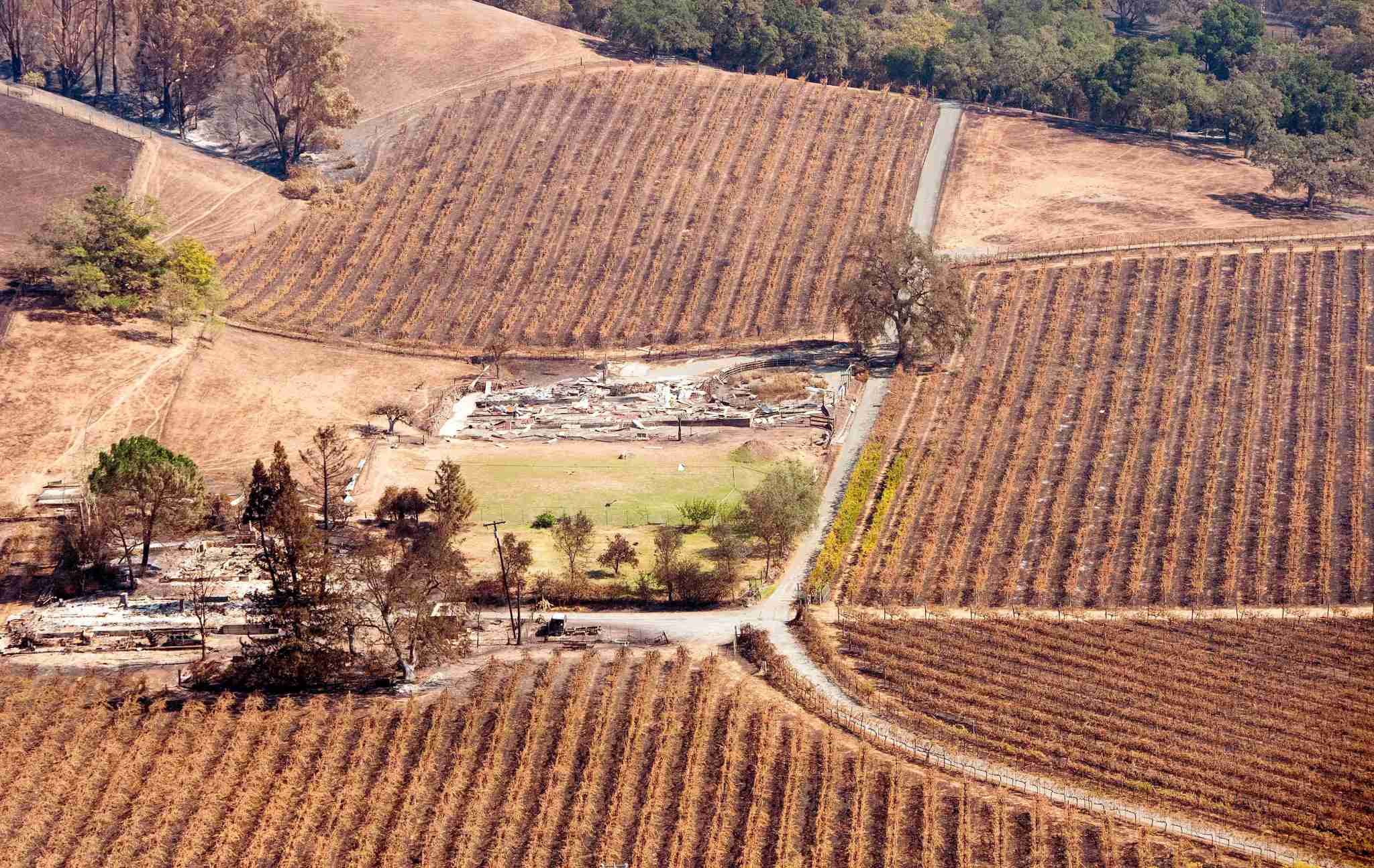 An aerial view shows a burned property surrounded by charred vineyards in Santa Rosa, California on October 12, 2017. Photo by Josh Edelson / AFP / Getty Images)