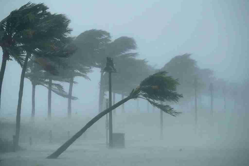FORT LAUDERDALE, FL - SEPTEMBER 10: Trees bend in the tropical storm wind along North Fort Lauderdale Beach Boulevard as Hurricane Irma hits the southern part of the state September 10, 2017 in Fort Lauderdale, Florida. The powerful hurricane made landfall in the United States in the Florida Keys at 9:10 a.m. after raking across the north coast of Cuba. (Photo by Chip Somodevilla/Getty Images)