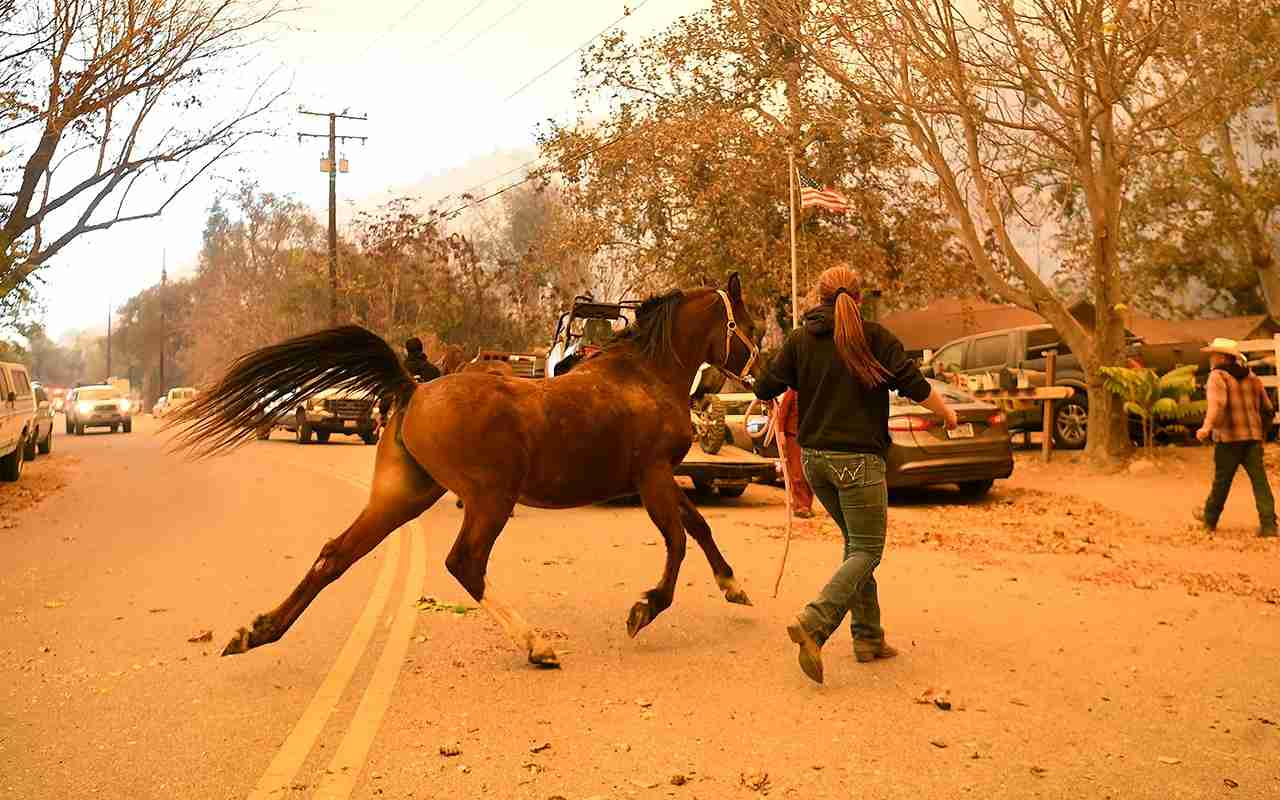 A resident evacuate a horse along Nye Road as the Thomas fire approaches in Casita Springs. (Photo by Wally Skalij/Los Angeles Times via Getty Images)