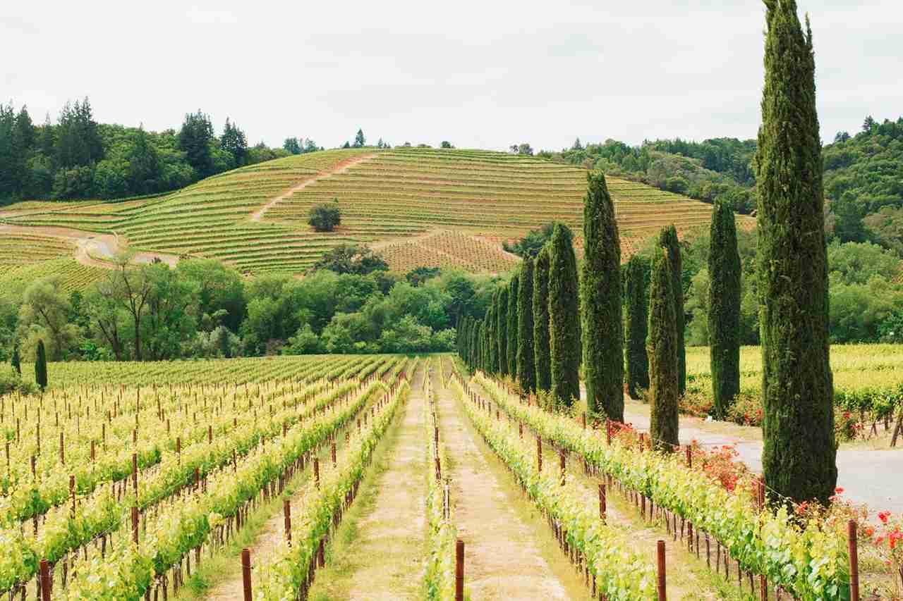 Napa Valley vineyard. Photo by @karen.kardatzke via Twenty20