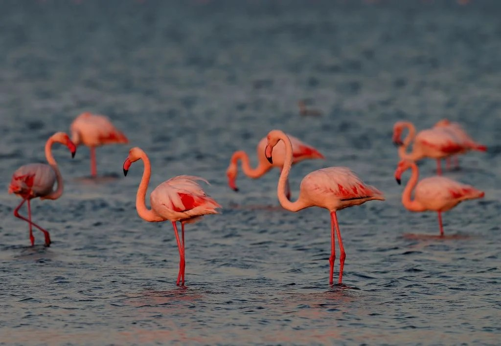 Get Paid to Live on Bahamas and Care for Flamingos