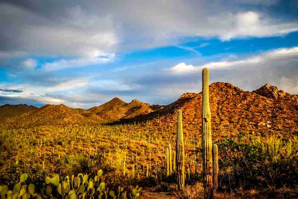 Saguaro National Park in Tucson, Arizona. Photo by Chiara Salvadori / Getty