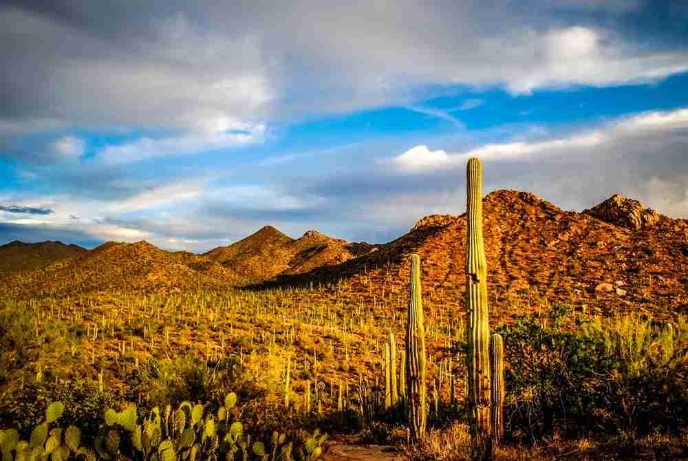 Saguaro National Park in Tucson, Arizona. Photo by Chiara Salvadori / Getty