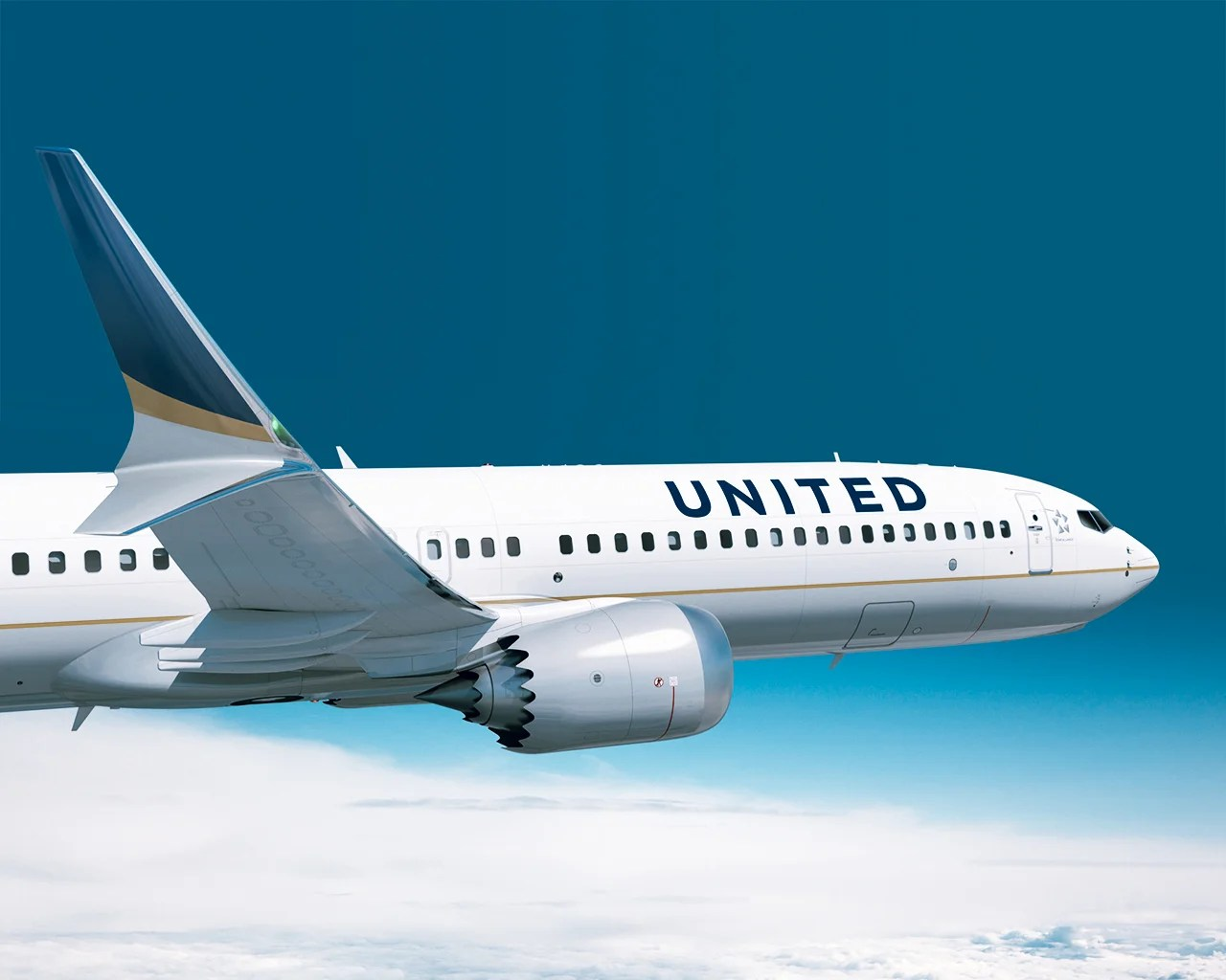 United Suspends New Reservations For Pet Travel In Cargo