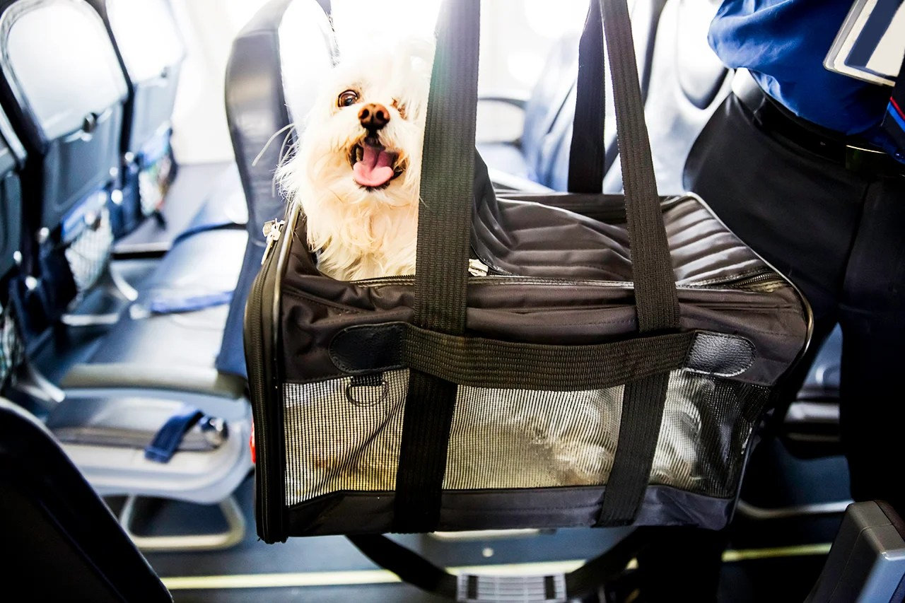 Dog Dies After FA Forces Passenger to Put Carrier Overhead