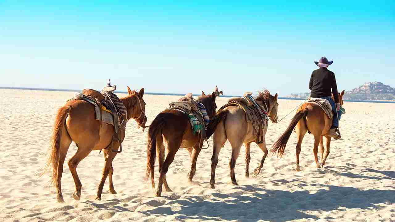 Horses on the beach in San Jose del Cabo. (Photo by wwing/Getty Images)