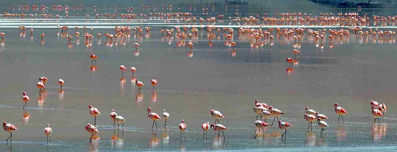 A flock of flamingos are seen wading in Laguna Colorada located within the Eduardo Abaroa Andean National Fauna Reserve. (Photo by MARTIN BERNETTI/AFP/Getty Images)